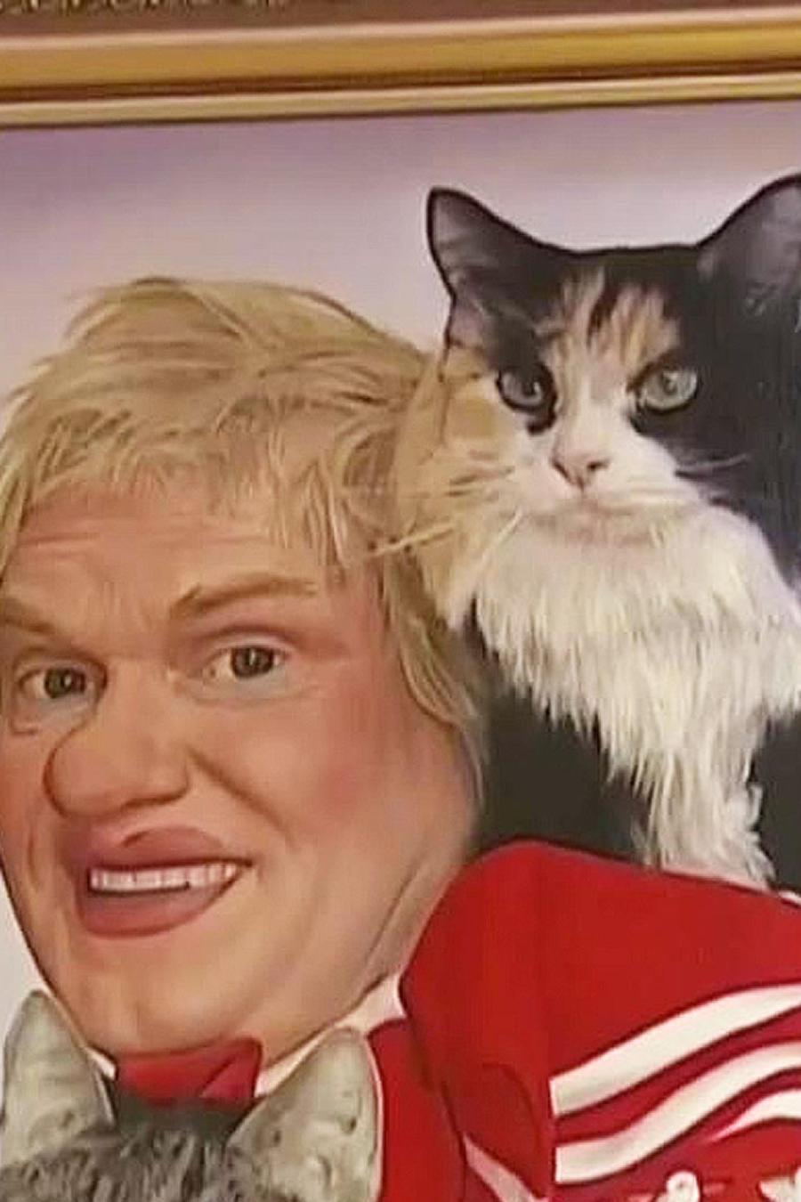 circo de gatos
