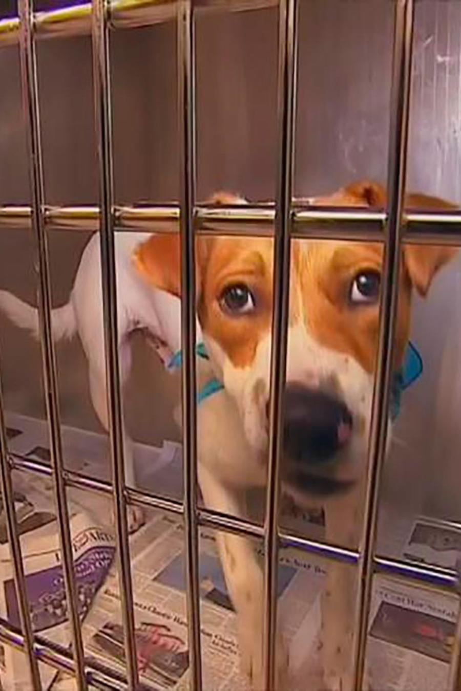 Los refugios para animales abandonados están buscando un nuevo hogar para las mascotas