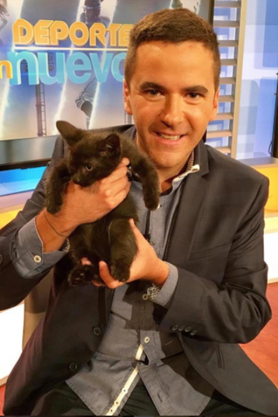 La suerte de los gatos los perros la desean, razones por la que debes adoptar uno