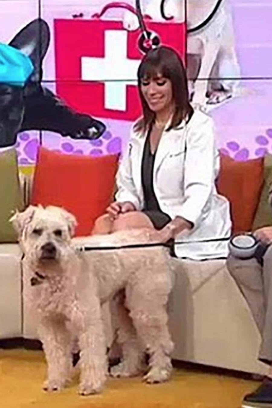 Te contamos cuáles son la alergias más comunes en mascotas y cómo tratarlas