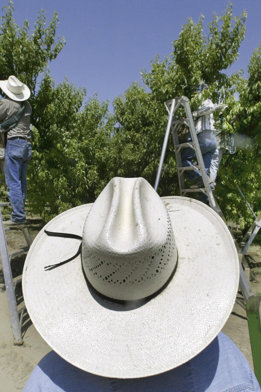 Imagen de archivo de una plantación de frutas en California.