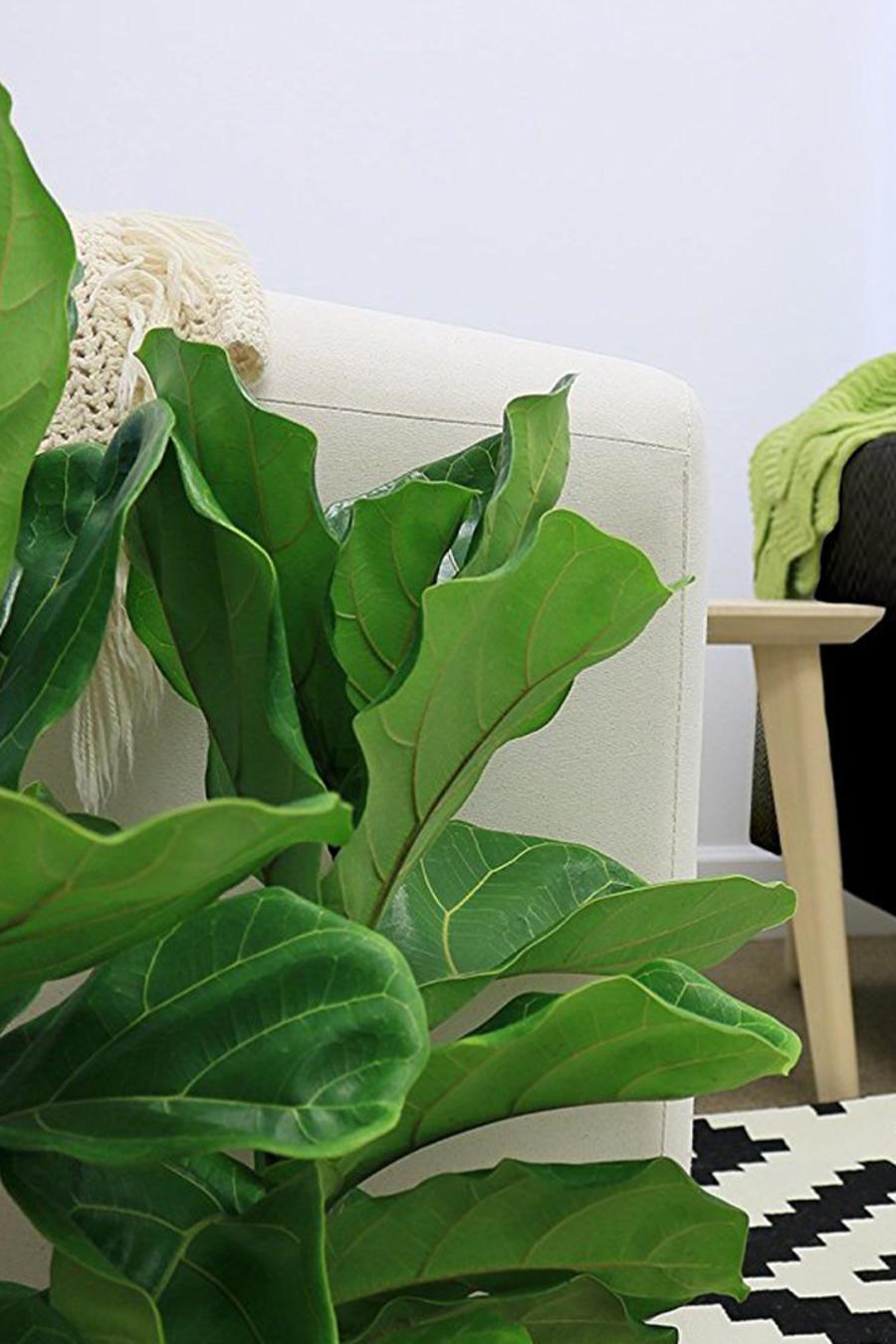 Plantas ideales para darle un toque verde a tu casa