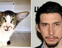"""Vota aquí si piensas que este gato se parece al actor de """"Star Wars"""", Adam Driver."""