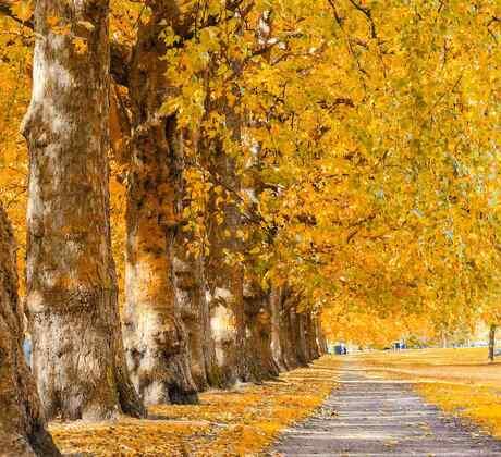 Parque con árboles en otoño