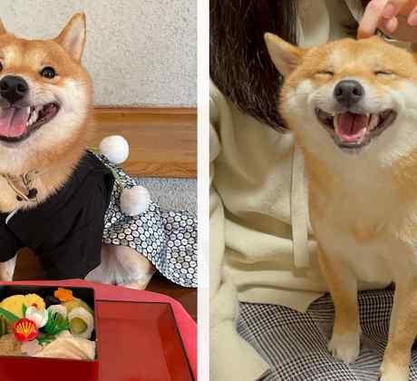 Perrito adorable sonrisa