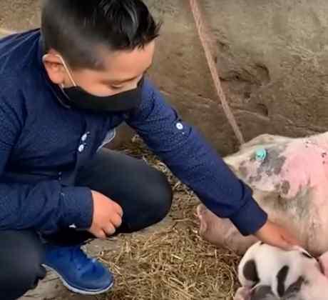 Juan Gabriel ayuda a su cerdita