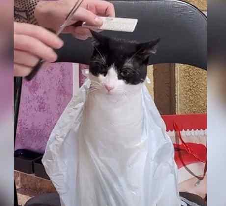 Gato peluquería 1