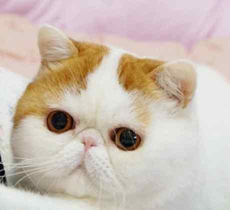 gatito posado entre cobijas