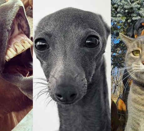 selfie animales