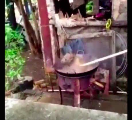 Hierven a un perro vivo (VIDEO)