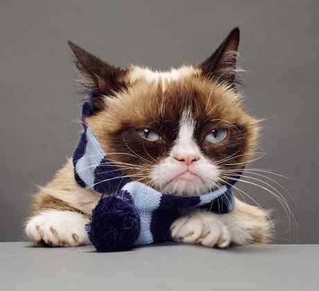 gato con bufanda