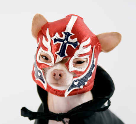 Perro luchador