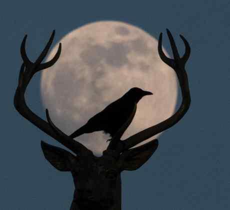 Luna del Ciervo