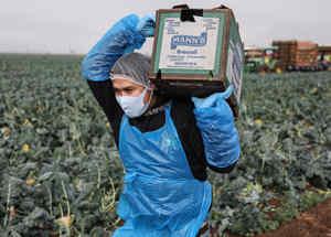Trabajador agrícola en Celexico, California