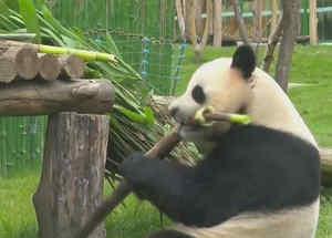 casa de pandas