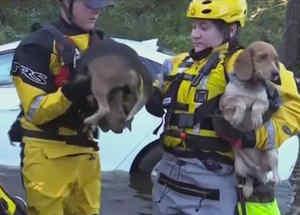 rescatan perritos