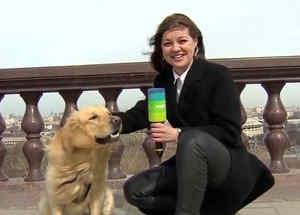 Perro roba micrófono