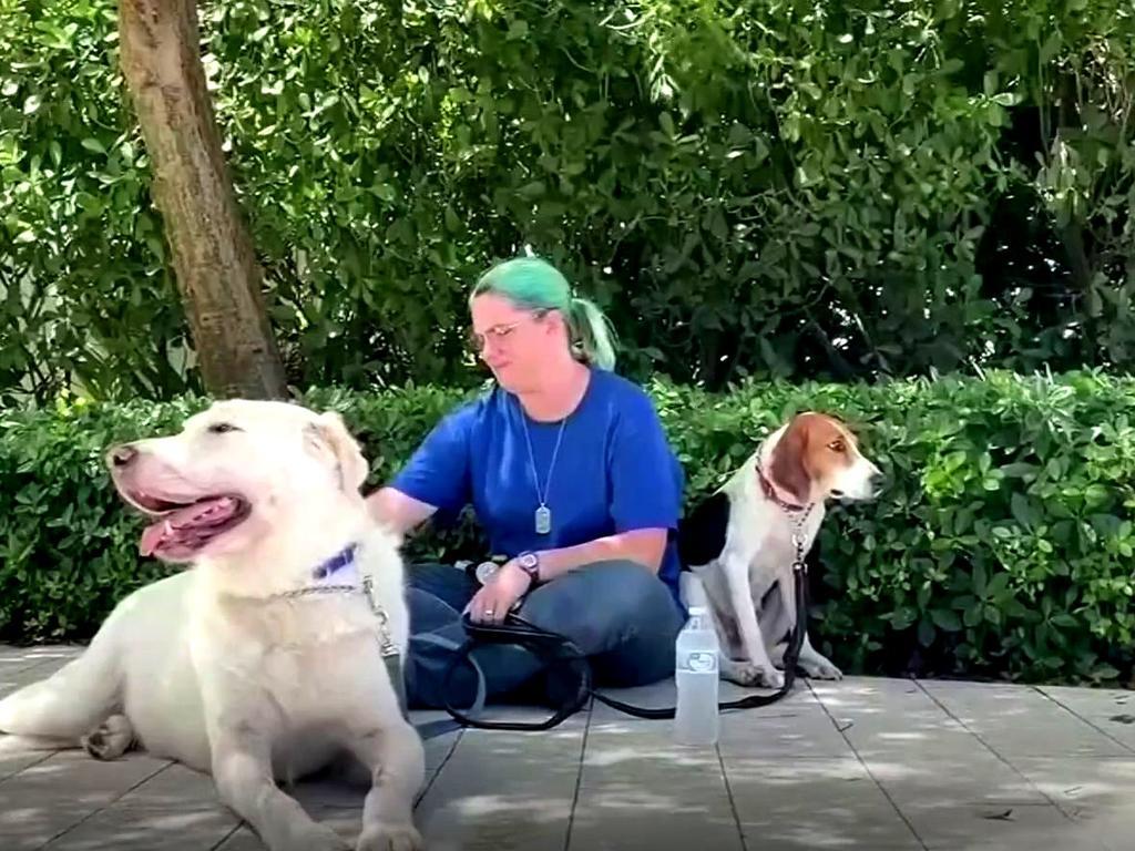 Los familiares de las víctimas del colapso tienen un equipo de perros  terapéuticos a su disposición | Telemundo